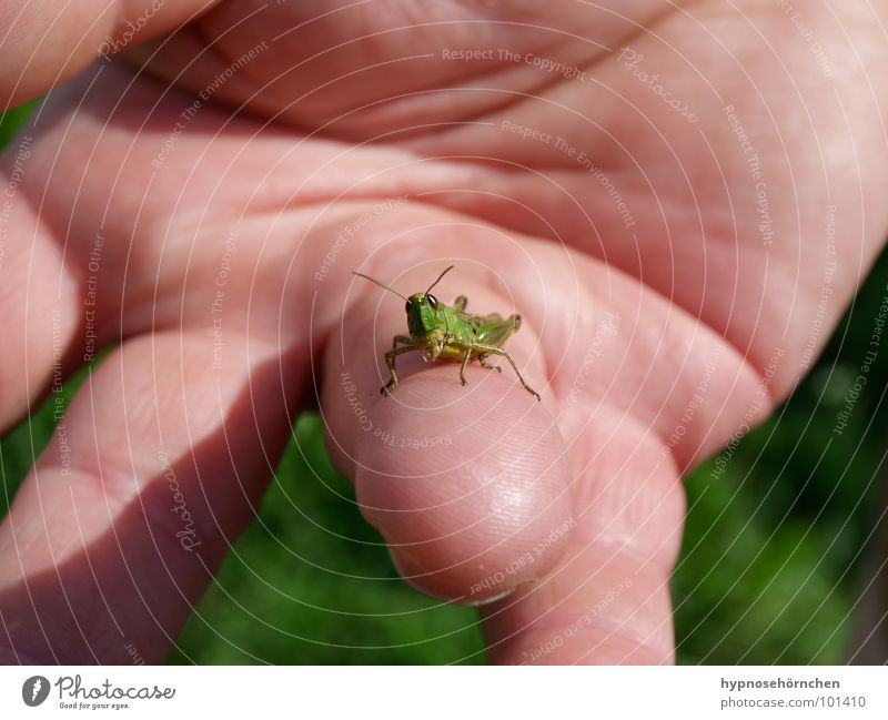 Look at this! Locust Green Insect Hand Fingers House cricket Nature