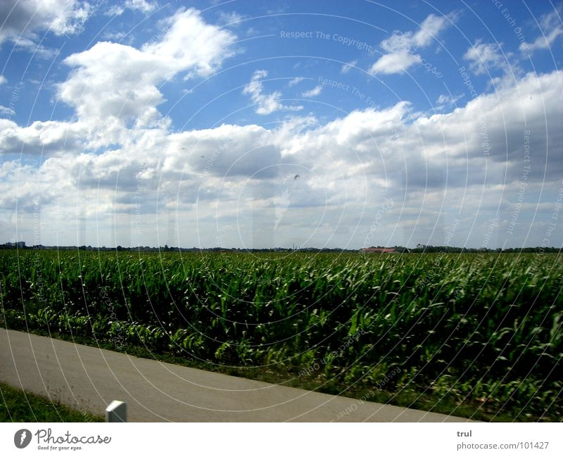 when you're sitting in the bus... Clouds Grass Horizon Summer Sky Blue Street Americas