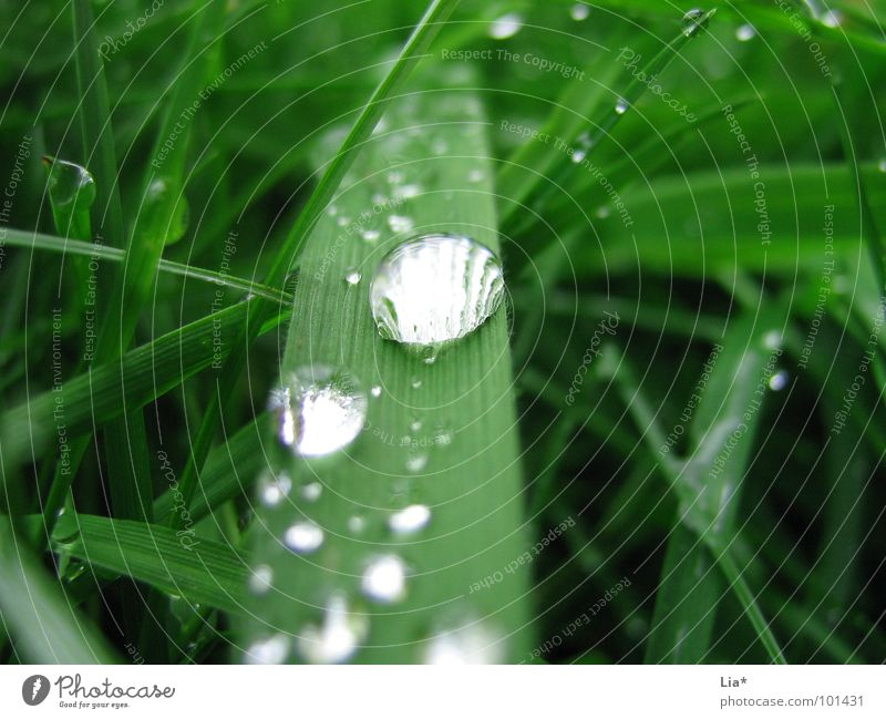 Pearled Grass Wet Green Meadow Drops of water Rain Reflection Relaxation Calm Water Macro (Extreme close-up) Close-up studded with pearls Nature plant