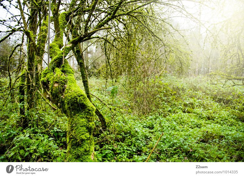 magic forest Environment Nature Landscape Sunlight Autumn Plant Tree Bushes Forest Virgin forest Exotic Fantastic Fresh Sustainability Natural Green