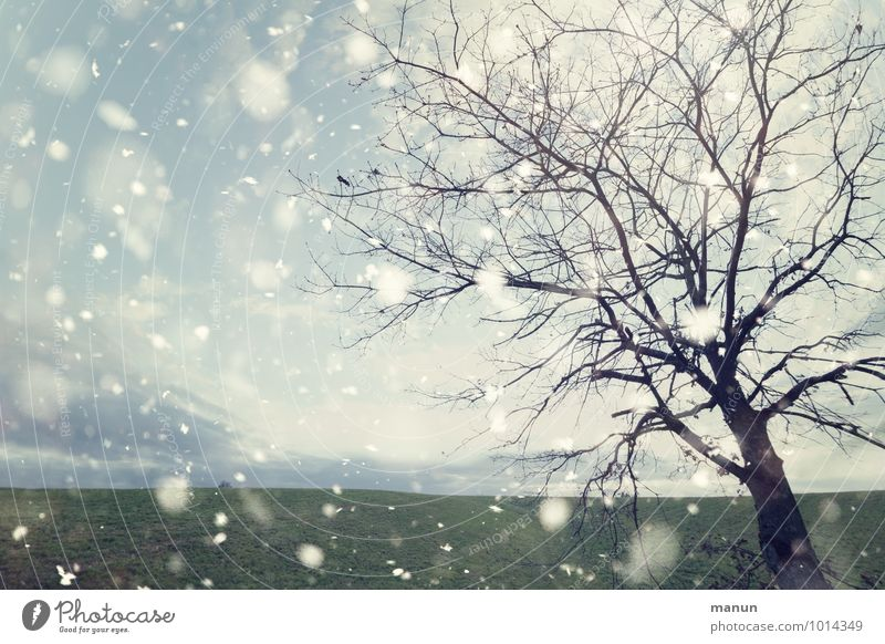 Nature Tree Landscape Winter Cold Meadow Natural Snowfall Ice Weather Field Wind Frost Snowflake