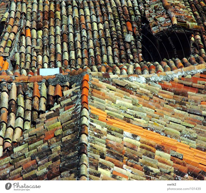 Croatian roofs II Village Small Town Old town Populated House (Residential Structure) Architecture Roof Chimney Historic Many Orange Red Idyll Roof ridge
