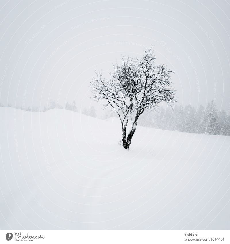 snow flurries Environment Nature Landscape Winter Weather Snow Snowfall Tree Esthetic Black White Emotions Moody Power Calm Loneliness Cold Colour photo