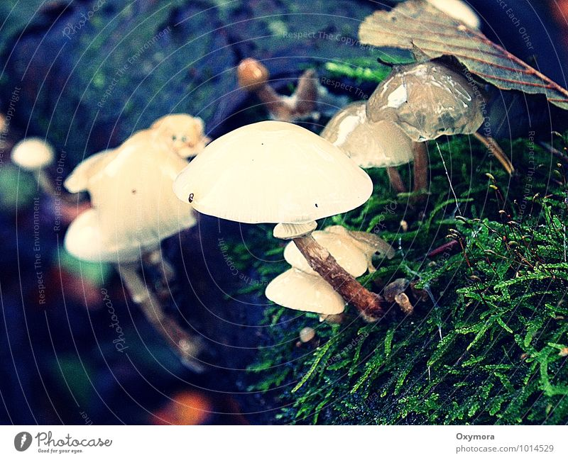 Wet and slimy Environment Nature Autumn Forest Wood Juicy Brown Green White Mushroom Poison Slimy Mushroom picker Colour photo Exterior shot Day