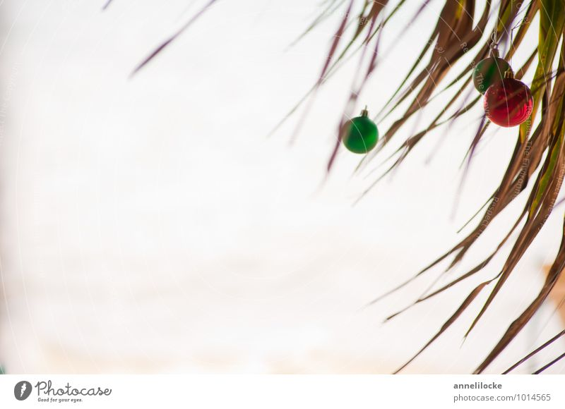 Vacation & Travel Christmas & Advent Plant Green Summer Tree Ocean Red Beach Far-off places Environment Coast Tourism Sphere Summer vacation Exotic