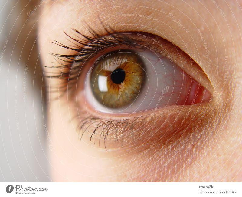 eye contact Woman Pupil Eyelash Eyebrow Eyes Close-up Macro (Extreme close-up) Face Human being Head Skin