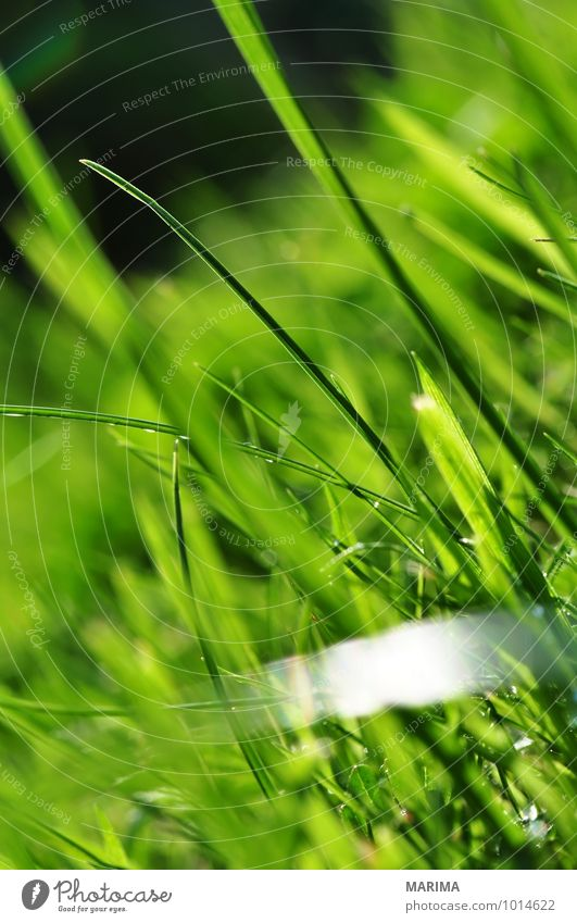 photo of green grass, detail Calm Agriculture Forestry Plant Grass Meadow Growth Green organic Biological biologically Blade of grass Agricultural crop