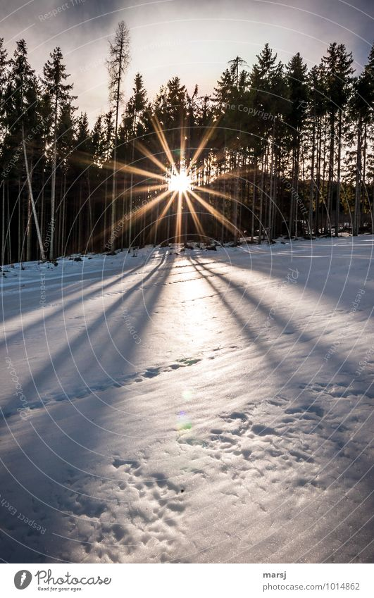 A conciliatory closing of the day Nature Sunrise Sunset Sunlight Winter Weather Beautiful weather Ice Frost Snow Forest Illuminate Exceptional Authentic Natural