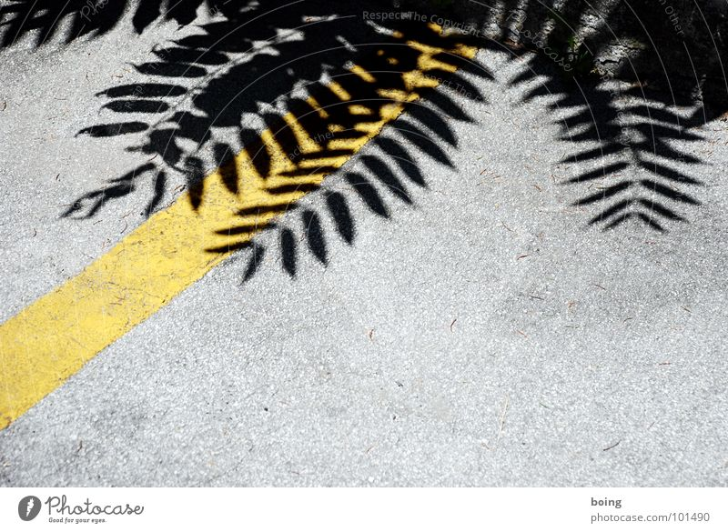 my timing is flawed Stripe Border Traverse Staghorn sumac Tree Front garden Park Park bench Parking Parking lot Summer Lunch Chirping Reserved Carpool Feeble