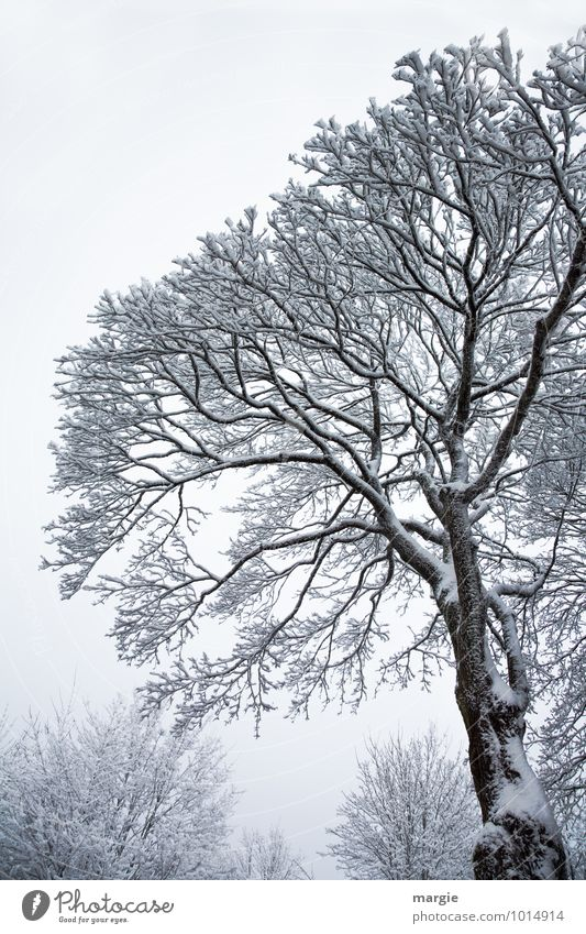 winter tree Environment Nature Landscape Winter Climate Climate change Weather Ice Frost Snow Snowfall Plant Tree Bushes Forest Freeze White Sadness Concern