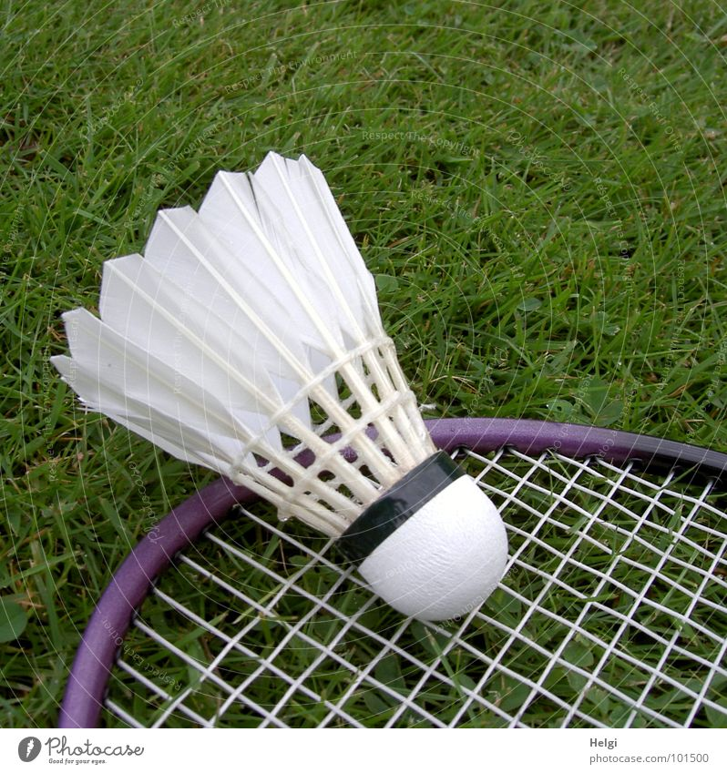 a badminton ball is lying on a badminton racket in the grass Badminton Lining Playing Leisure and hobbies Grass Green White Violet Sports Feather Frame Lawn Lie