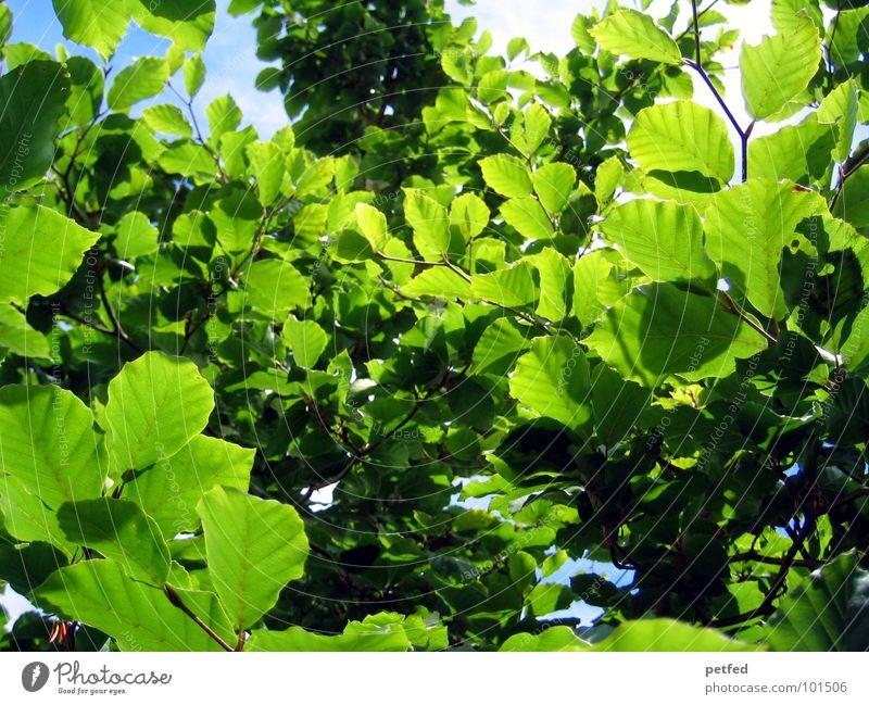 Nature Tree Sun Green Blue Summer Joy Clouds Yellow Spring Garden Weather Branch Tree trunk God Deities
