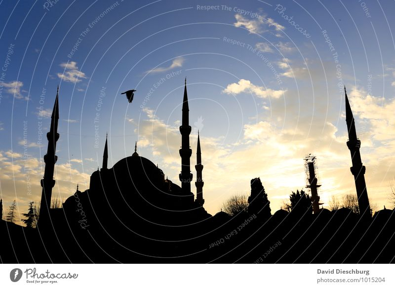 Evening mood - Blue Mosque Vacation & Travel Tourism Sightseeing City trip Cruise Summer vacation Sky Clouds Town Church Tourist Attraction Yellow Black White