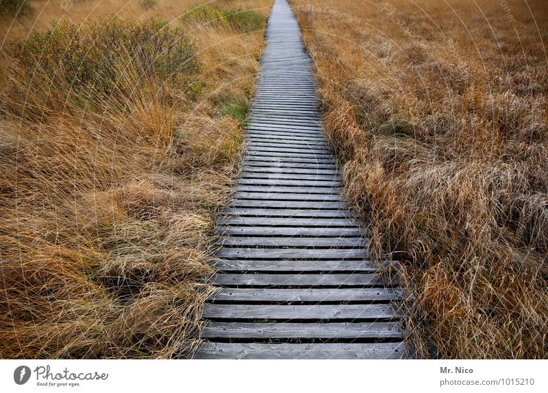 directly Vacation & Travel Trip Freedom Environment Nature Landscape Plant Grass Bushes Target Hiking High Venn Woodway Bog Marsh Idyll Right ahead Loneliness