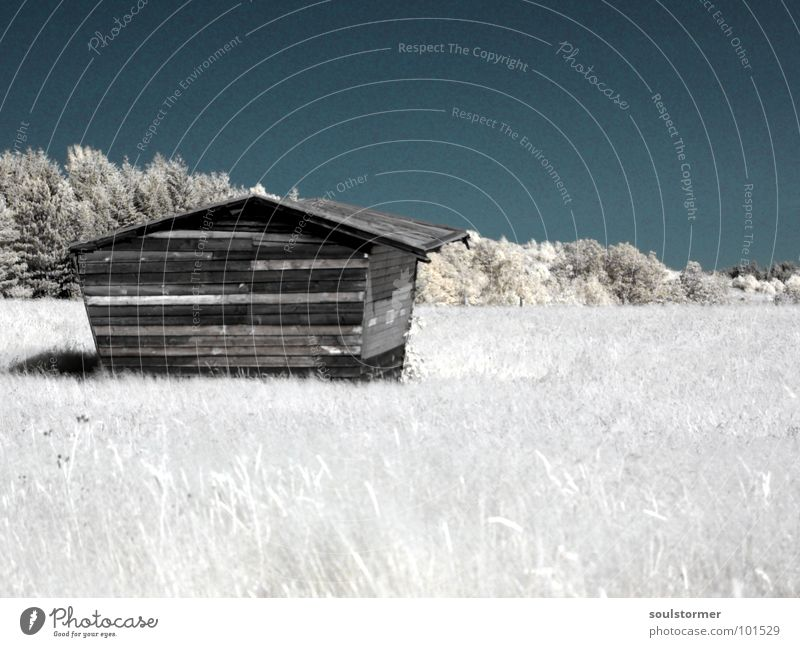 solitary Infrared Infrared color Black filter Clouds White Wood flour Grass Meadow Plant Green Tree Edge of the forest Clump of trees