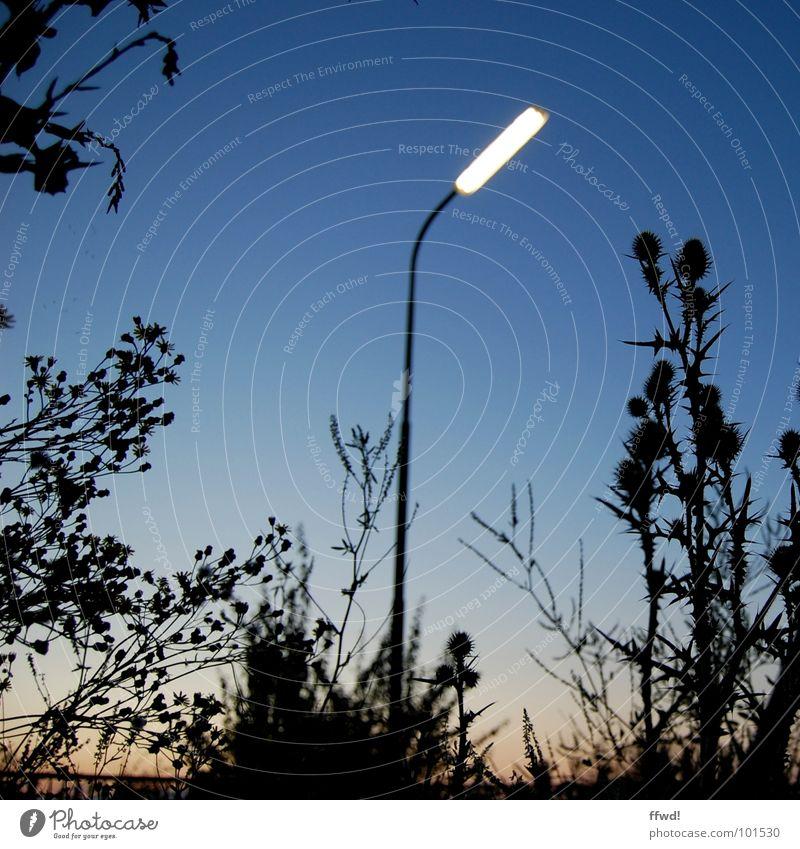 Nature Plant Lamp Moody Lighting Technology Lantern Street lighting Dusk Glow Electrical equipment