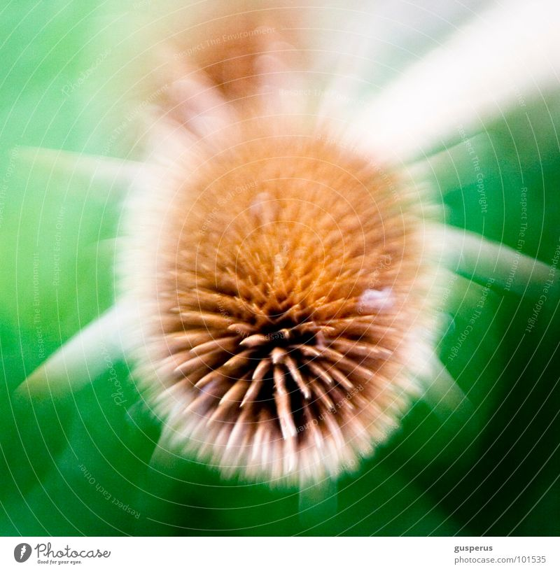 {cosmic s} Photomicrograph Blur Pierce Unclear Thistle Torun Lomography Obscure Movement Universe Ball spiked ball Thorn Plant motion microcosm universal