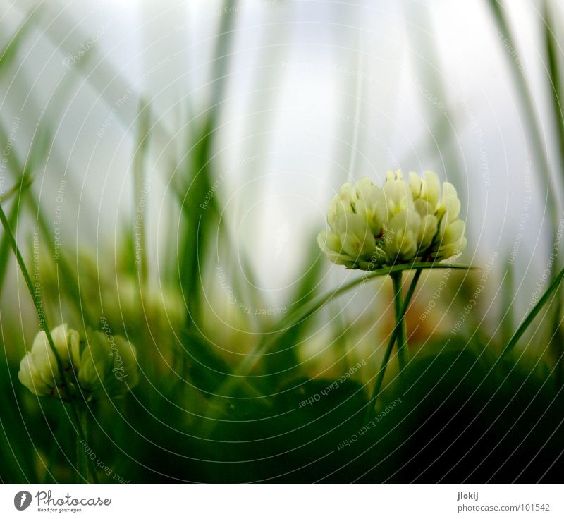 ((o(O)) Worm's-eye view Clouds Pull Dangerous Dark Hunter Clover Meadow Under Wood Growth Blossom Flower Plant Rain Grass Green Blur Low pressure zone Gale