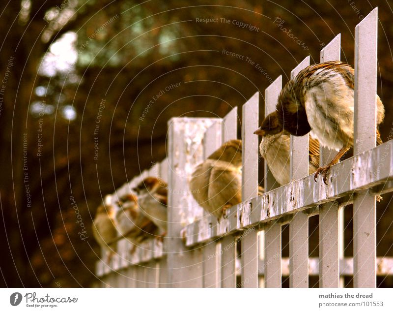 ordered and not collected Bird Animal Small Cute Cold Cleaning Fence Sparrow Row Sit Feces
