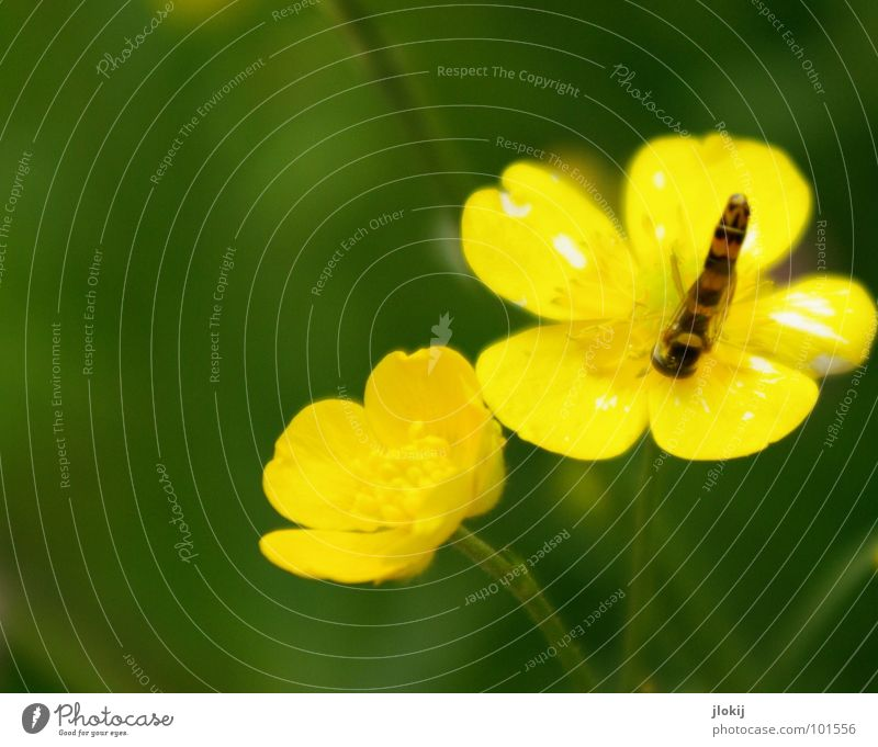 Nature Flower Green Plant Summer Animal Yellow Lamp Grass Glittering Small Speed Growth Wing Thin