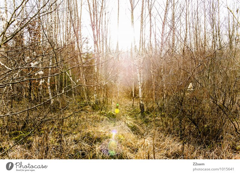 2200 Magic Forest Environment Nature Landscape Sun Sunlight Spring Beautiful weather Tree Bushes Sustainability Natural Relaxation Emotions Idyll Perspective