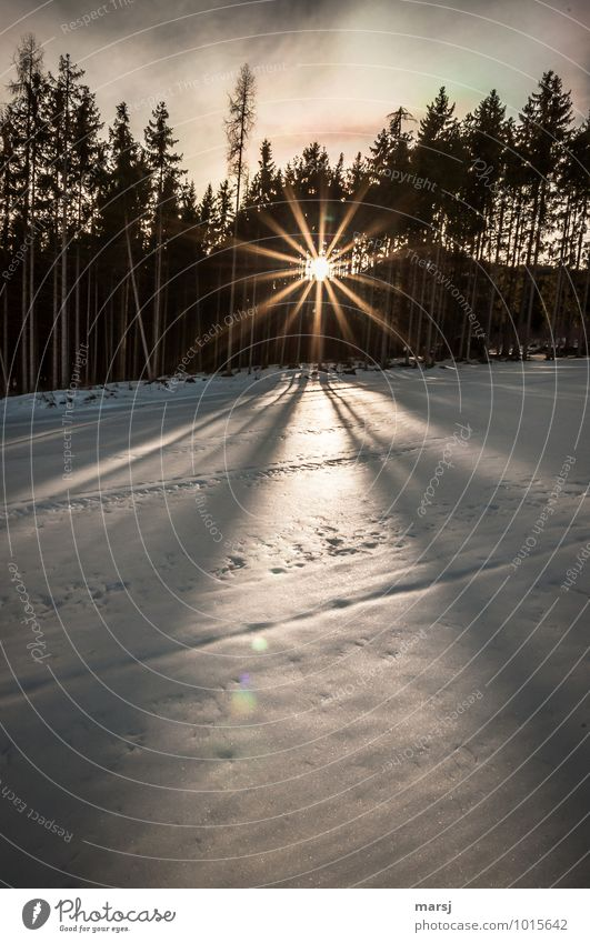 Nature Sun Calm Winter Forest Life Sadness Snow Exceptional Moody Contentment Illuminate Power Happiness Star (Symbol) Beautiful weather