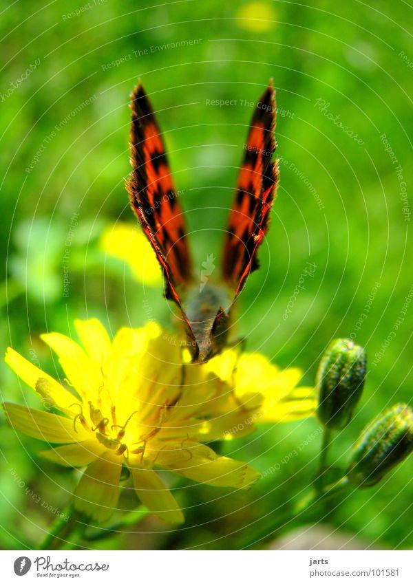 \Wings/ Butterfly Meadow Flower Summer Departure Beautiful Bundle Colour jarts Aviation
