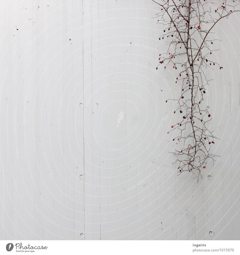 City Plant Red Loneliness Black Cold Environment Wall (building) Sadness Wall (barrier) Gray Moody Above Fruit Gloomy Bushes
