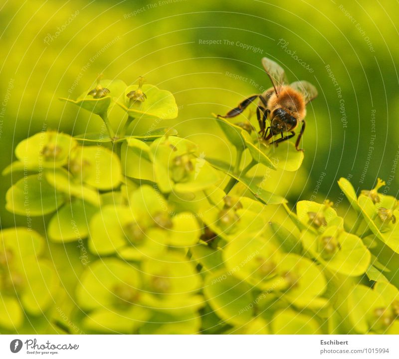 Sunday feast Breakfast Nature Plant Animal Flower Blossom Wild plant Pet Farm animal Bee Animal face 1 Breathe Blossoming Fragrance Discover Flying To feed