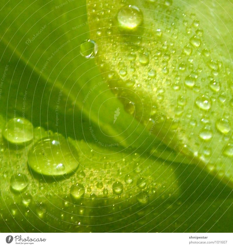 Green Plant Summer Leaf Dark Warmth Bright Drops of water Wet Near Peace Physics Square Fluid Moving (to change residence) Dynamics
