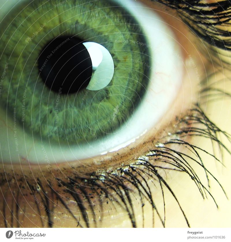 Green Eyes Emotions Gray Near Eyelash Soul Pupil Iris