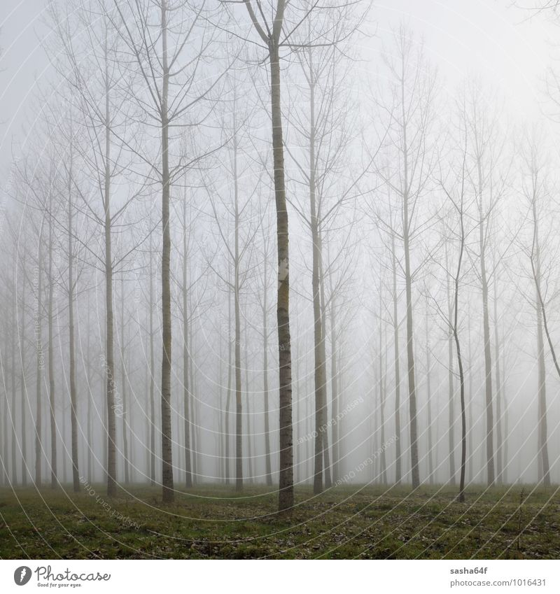 Forest in deap fog and autumn leaves on the green ground Nature Tree Leaf Landscape Black Dark Forest Environment Autumn Natural Dream Weather Rain Gloomy Fog Soft