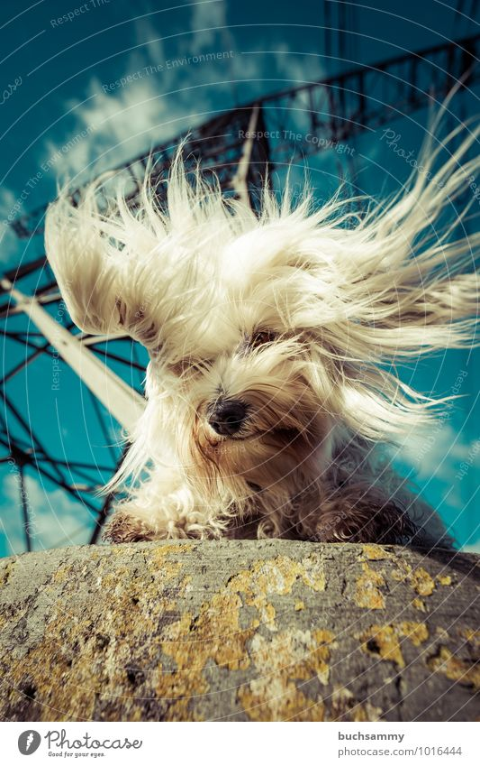 Pure Energy Joy Hairdresser Environment Animal Sky Clouds Sunlight Beautiful weather Tower Long-haired Pet Dog Pelt 1 Stone Steel Wild Blue Black White