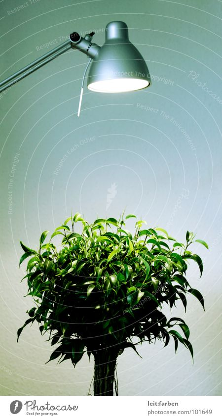 Nature Green Tree Plant Loneliness Lamp Lighting Growth Bushes Decoration Clarity Desk Workshop Hard Placed Development
