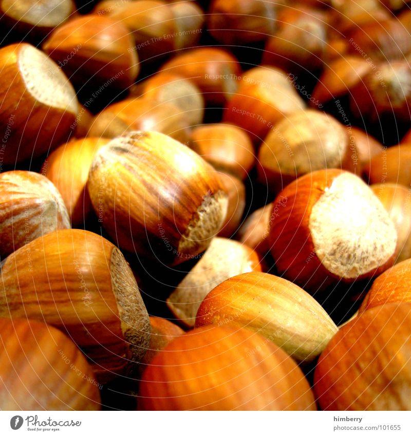 nut case Nut Hazelnut To break (something) Hard Macro (Extreme close-up) Close-up Autumn useful Nutrition Appetite Markets Organic produce raspberryoni