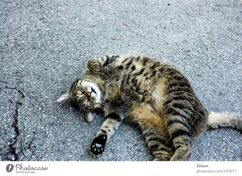 Cat Animal Love Street Movement Concrete Lie Sweet Cute Pelt Lady Crack & Rip & Tear Pet Mammal Paw Tails