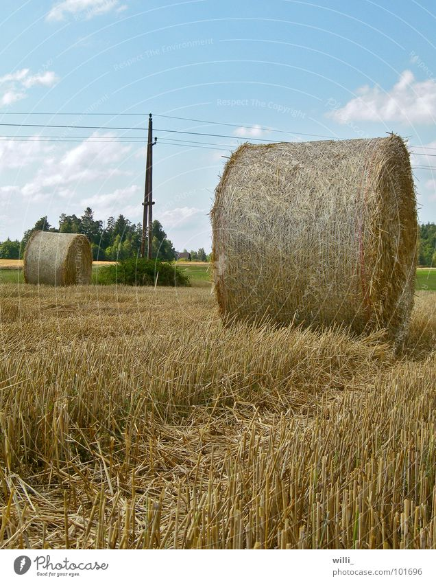 a round affair Straw Bale of straw Dry Field Electricity pylon Stubble field Stopper Harvest Thresh Combine Wheat Roll of straw Round Worm's-eye view Summer