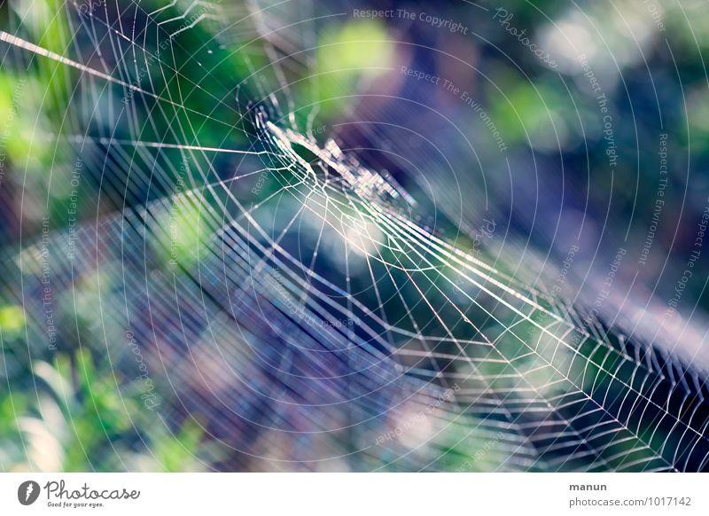 web Nature Animal Wild animal Spider Spider's web Threat Natural Accuracy Ease Network Precision Dangerous Trap Ambush Colour photo Exterior shot Close-up