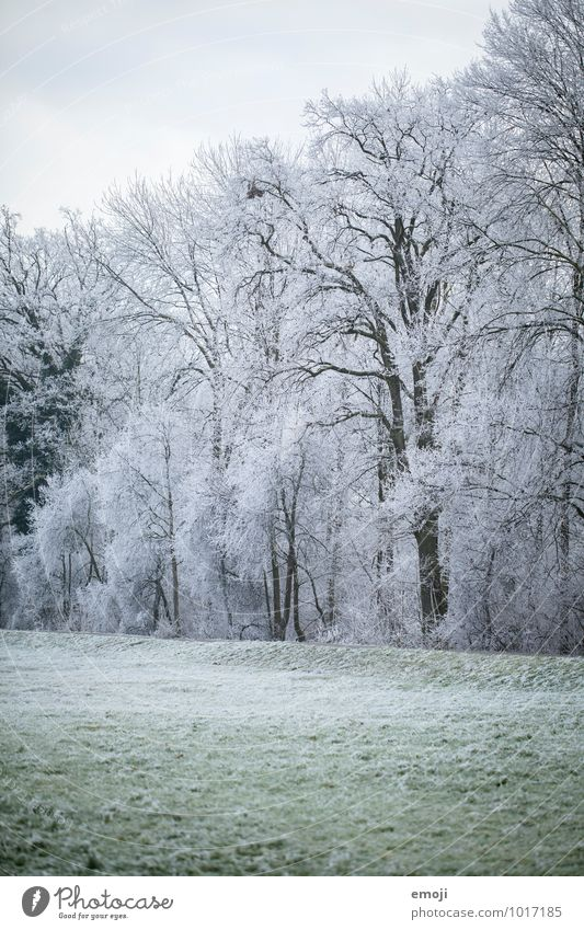 Nature Plant White Tree Landscape Winter Forest Cold Environment Meadow Snow Ice Frost