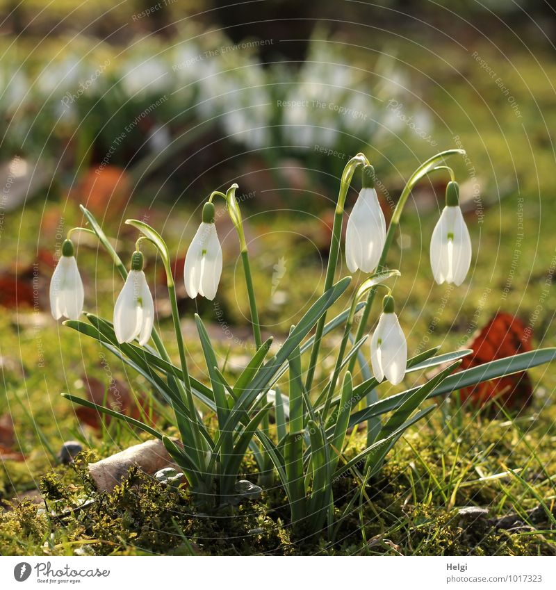 one more thing... Environment Nature Landscape Plant Spring Beautiful weather Flower Grass Leaf Blossom Snowdrop Spring flower Spring flowering plant Park