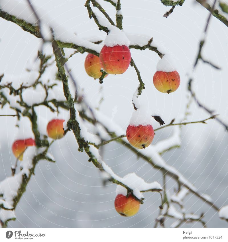Nature Plant White Tree Red Calm Winter Cold Environment Yellow Snow Natural Gray Healthy Exceptional Garden