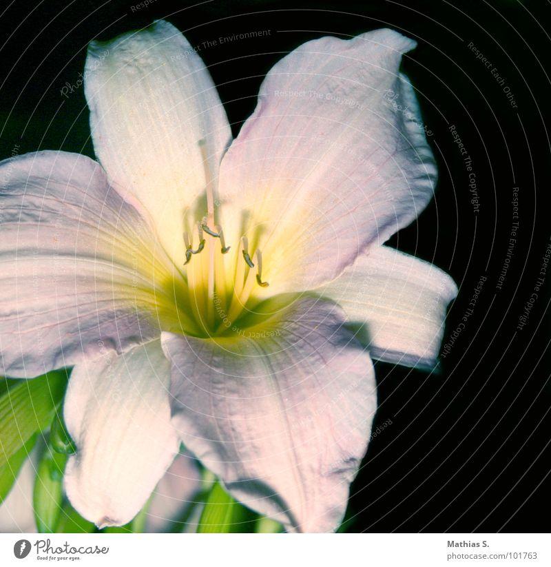 White Flower Green Plant Blossom Grass Happy Success Open Stalk Pollen Undo