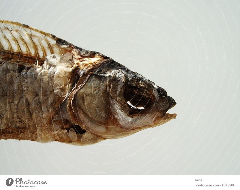 Animal Death Fish Dry Meat Barn Drought Skeleton Salt Dried Salty Fish bone Decay