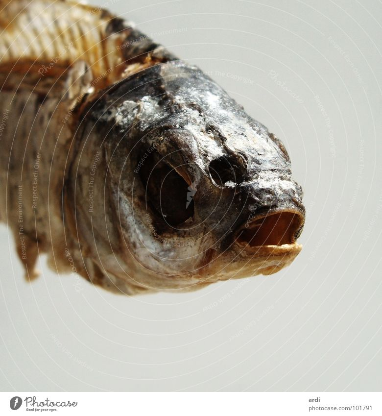 Animal Death Fish Dry Meat Barn Drought Skeleton Salt Dried Salty Fish bone Decay