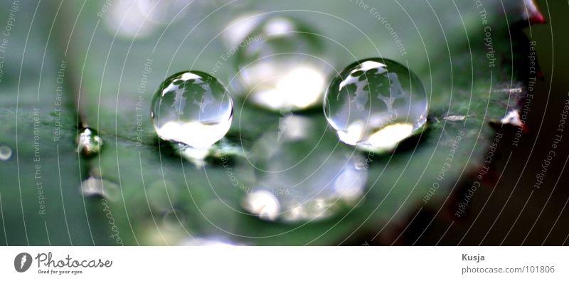 Nature Green Water Meadow Garden Rain Drops of water Wet