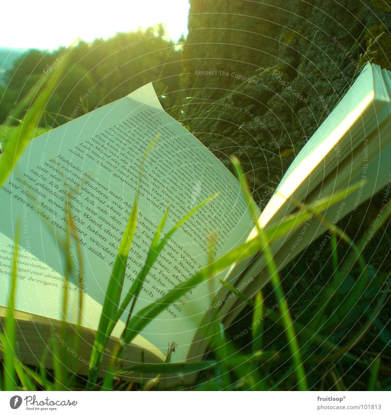 Everyday lifeOASE Cozy Meadow Book Tree Daydream Break Vacation & Travel Leisure and hobbies Sun To enjoy