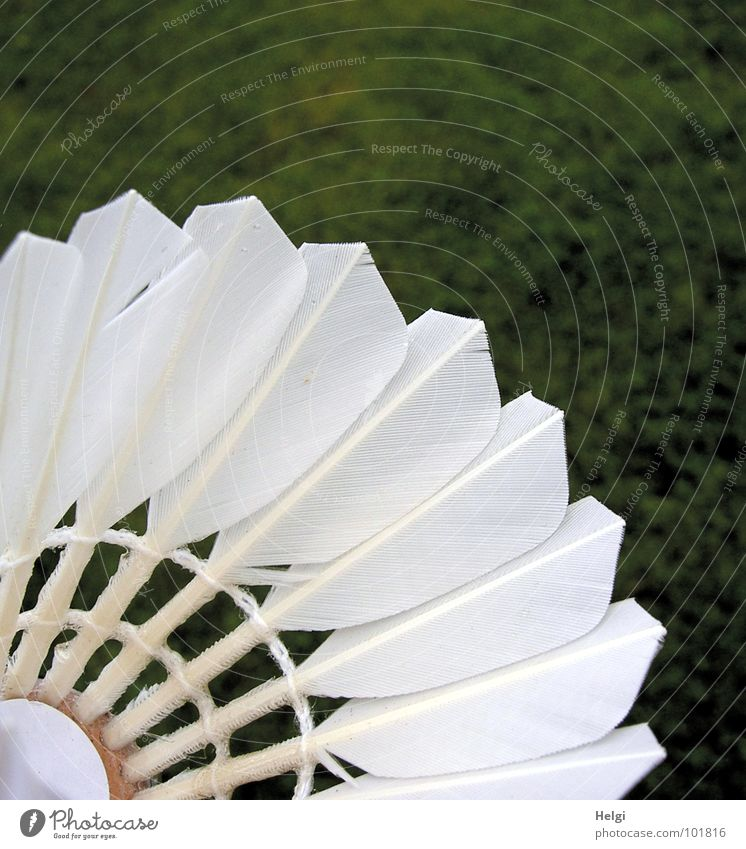 Close-up of feathers of a badminton in front of a green lawn Badminton White Playing Green Leisure and hobbies Macro (Extreme close-up) Feather Keel