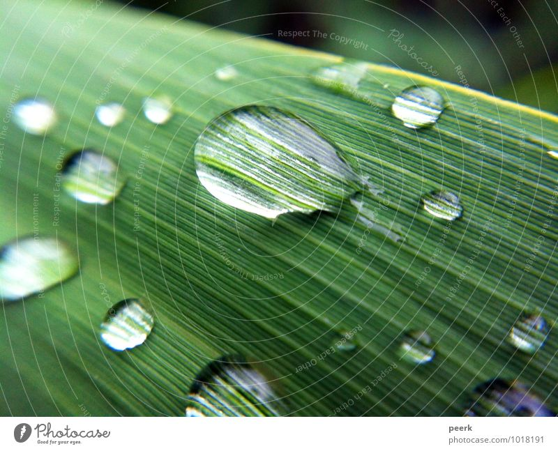 Drops on reed Environment Nature Plant Water Summer Grass Bushes Leaf Foliage plant Garden Park Meadow Lakeside River bank Bog Marsh Pond Brook Deserted