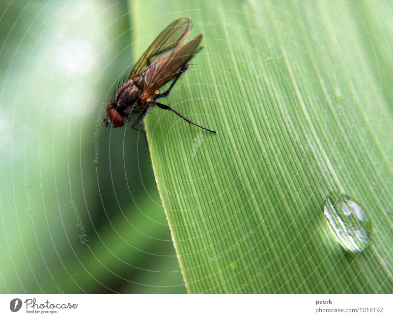 fly on reed leaf Spring Summer Climate Climate change Plant Grass Bushes Bog Marsh Pond Lake Animal Fly 1 Authentic Fresh Green Colour photo Exterior shot