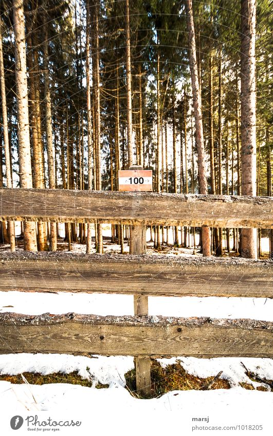 100 Way Trip Hiking Nature Winter Forest Wood Sign Digits and numbers Signs and labeling Signage Warning sign Gloomy Loneliness Arrangement Road marking